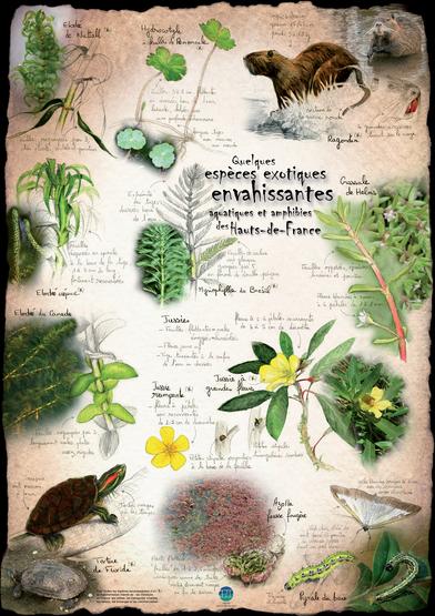 Poster Espèces exotiques envahissantes