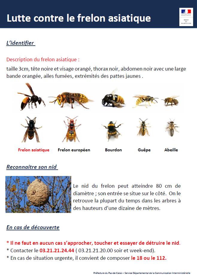 Poster Lutte contre le frelon asiatique